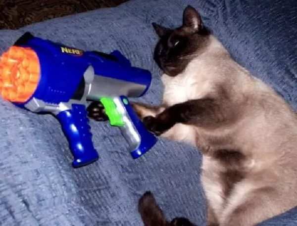 Cat with Nerf Gun