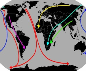The Top 10 Birds With the Longest Aerial Migration