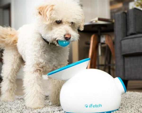 iFetch Automatic Ball Thrower