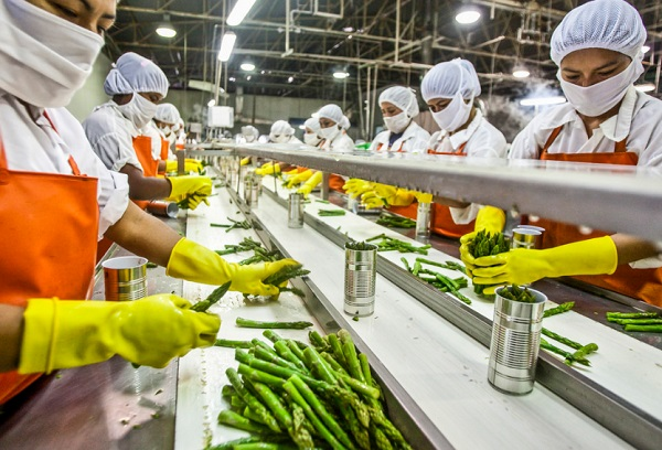 Food Processing Investment Opportunities in Asia