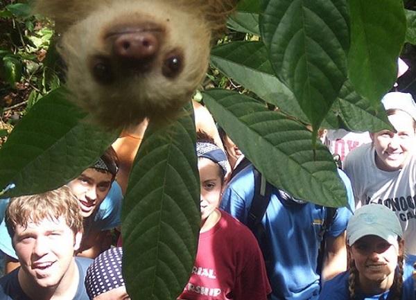 Sloth Photobomb
