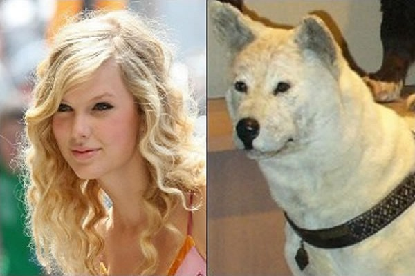 Taylor Swift Looks Like an Akitas