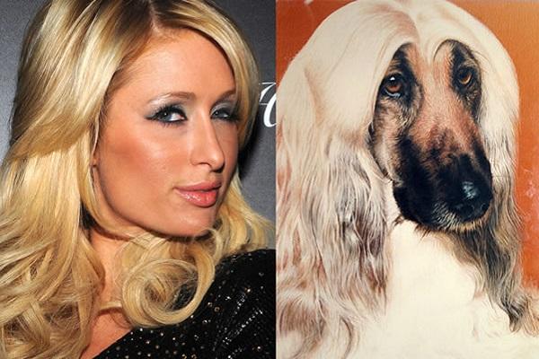 Paris Hilton Looks Like an Afghan