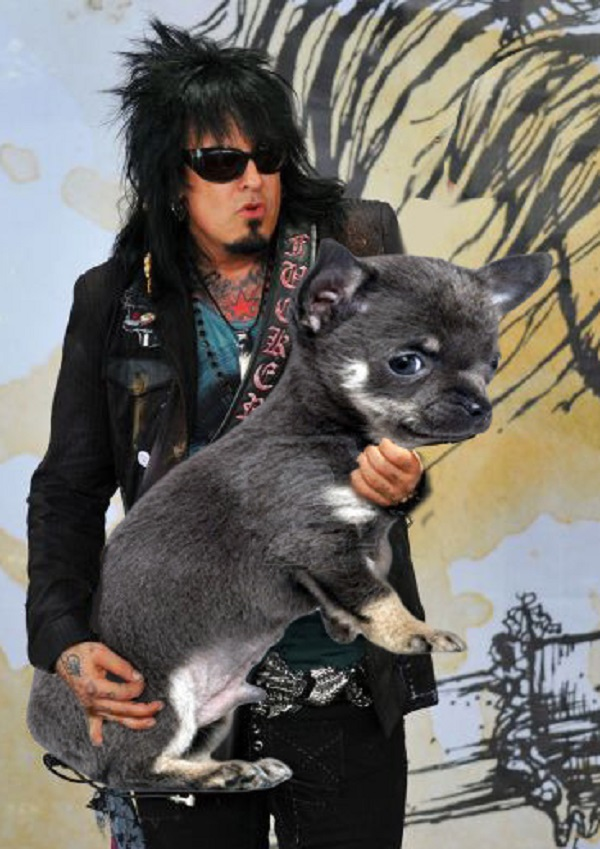 Nikki Sixx Dog Bass