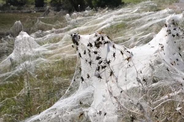 Its Raining Spiders
