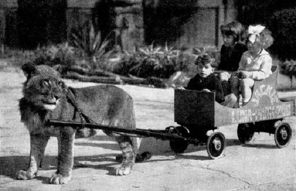 Lion Pulling a Cart