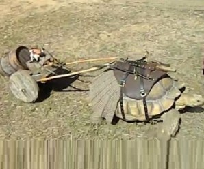 Ten Pictures of Unusual Animals Pulling Carts You Won't Believe are Real!