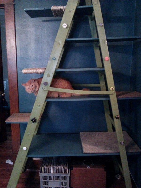 Metal Ladder Turned into a Cat Tree