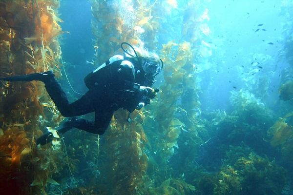 3. Go diving
