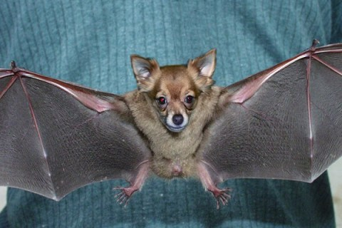 Ten of the Worlds Rarest Species of Bats and Where to Find Them