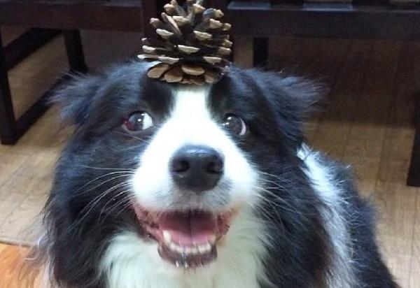 Border Collie - Human-Friendly Dog Breed