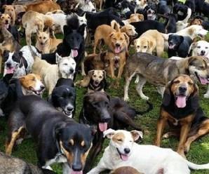 Top 10 Best Human Friendly Dog Breeds