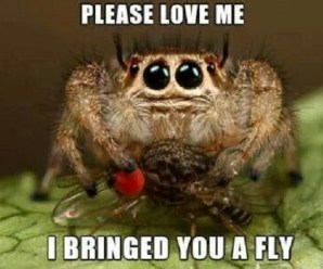 10 Reasons Why You Shouldn't Be Afraid of Spiders