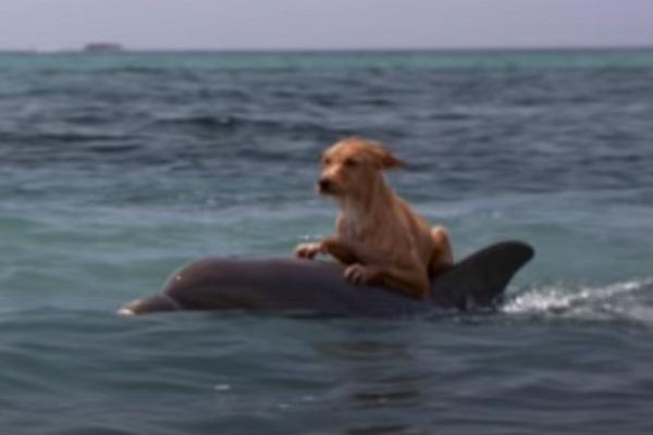Dog – Dolphin Friendship