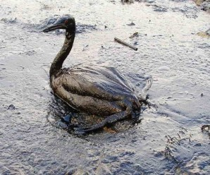 Ten of The Worlds Most Catastrophic Oil Spills Of All Time