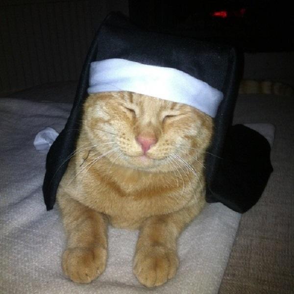 Pet in Nun Costume