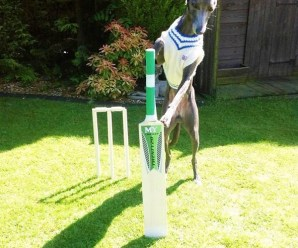 Ten Great Reasons to Love Cricket and Make a Bet on It