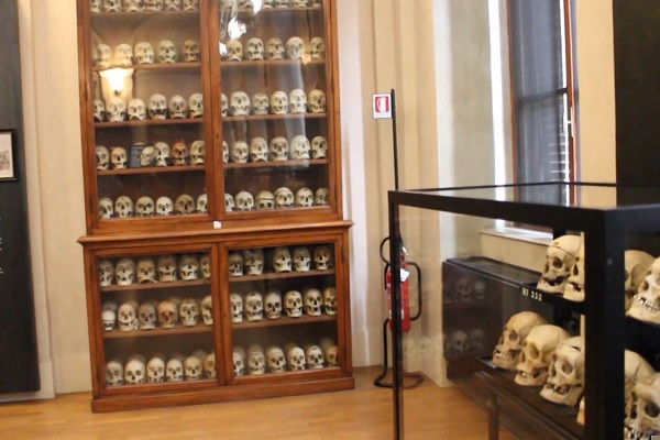 The Lombroso Museum Of Criminal Anthropology
