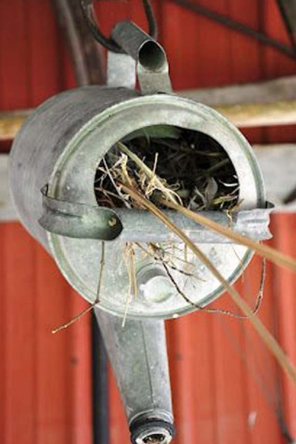 An Old Watering Can Used to Make a Birdhouse