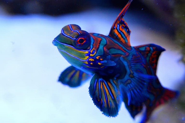 Did you know you can have Saltwater Aquarium Fish as a pet?