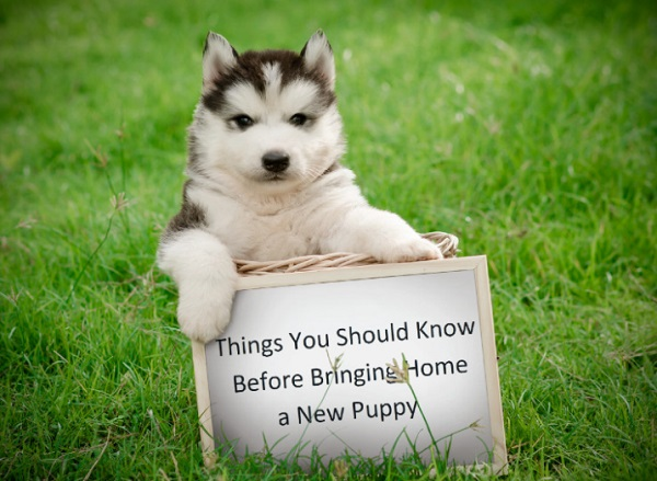 Ten Things You Should Know Before Bringing Home a New Puppy