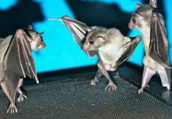 Encouraging Bats Into Your Garden