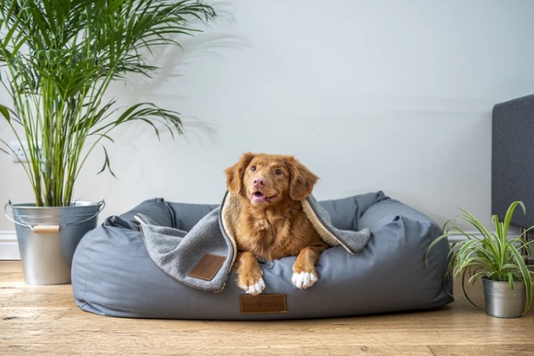 10 Things Your Dog Totally Deserves to Get
