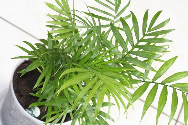 Get house plants