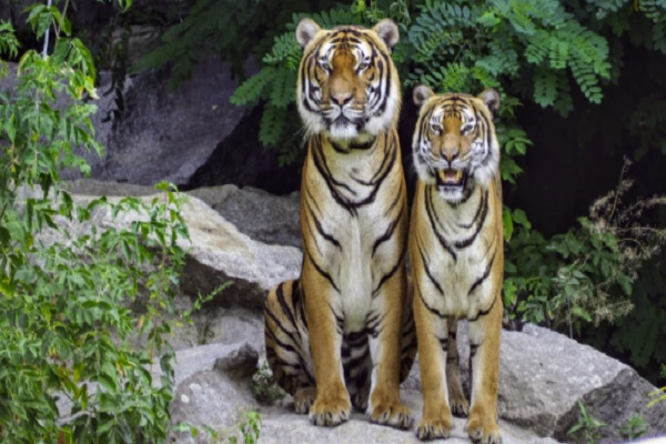 Some Practical Advice for Breeding Wild Animals