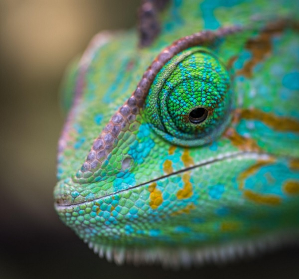 10 Tips To Taking Care Of Your Exotic Reptiles & Amphibians