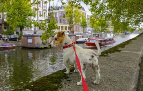 10 Useful Dog Walking Essentials