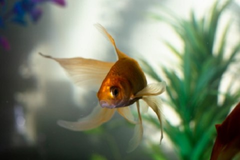 Ten Reasons Why Hiring Professionals Might Be The Perfect Choice When Designing An Aquarium