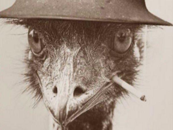 The War Over Bird Poop