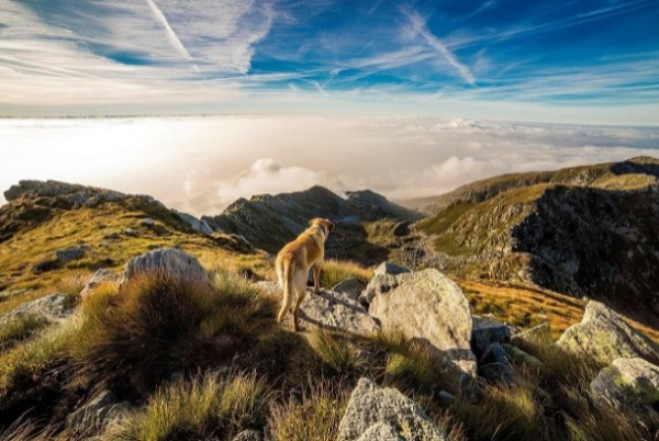 Top 10 Places to Explore with your pet in the U.S