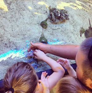Ding Darling Wildlife Refuge Touch Tank