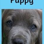 Naughty Puppy by Amy Lu