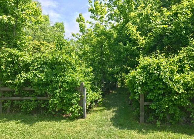 Dobbs Park Walking Trail Entrance
