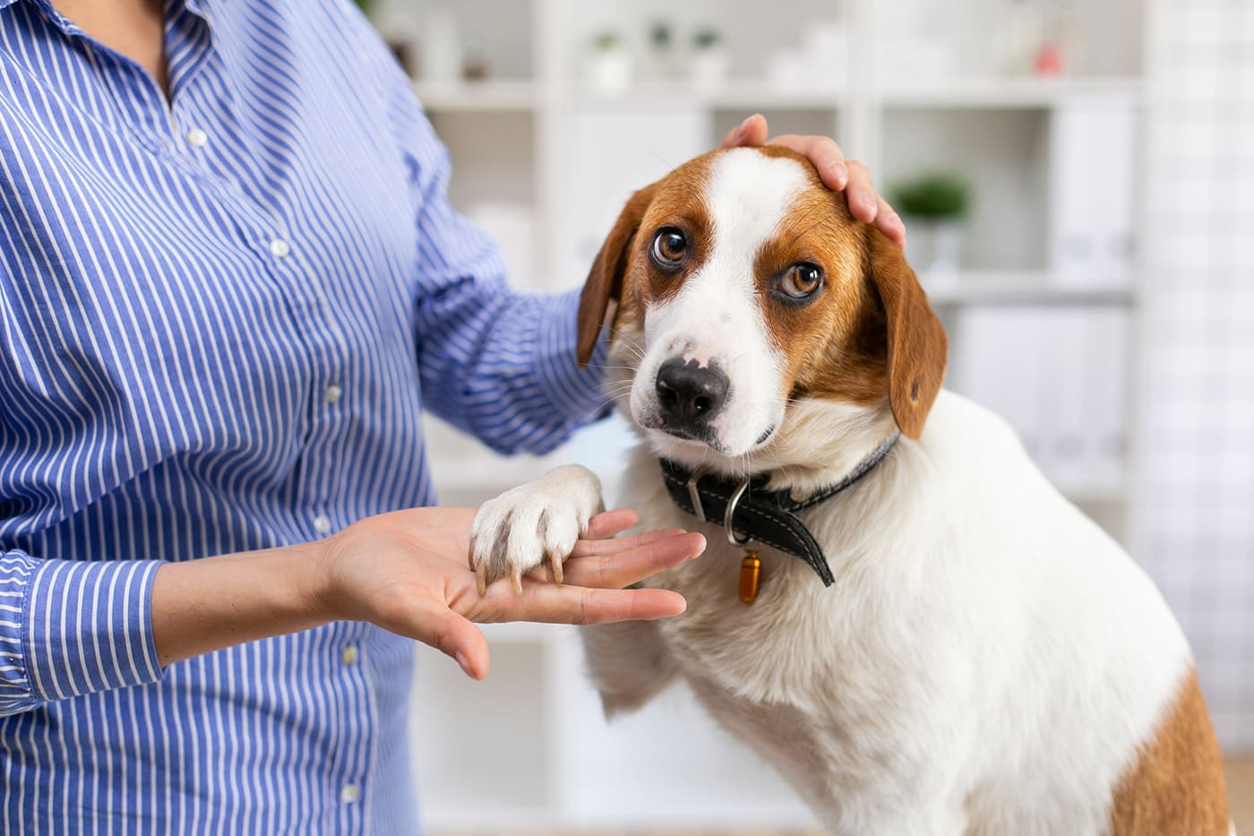 Dog Throwing Up Yellow Bile, causes and treatments