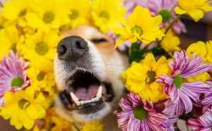 sneezing dog