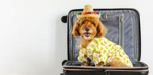travelling with pet