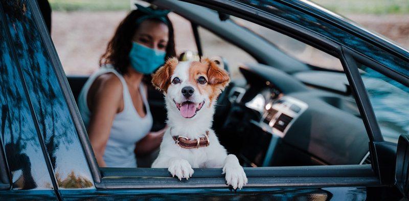 8 Dog Friendly Vacation Hotspots in Florida