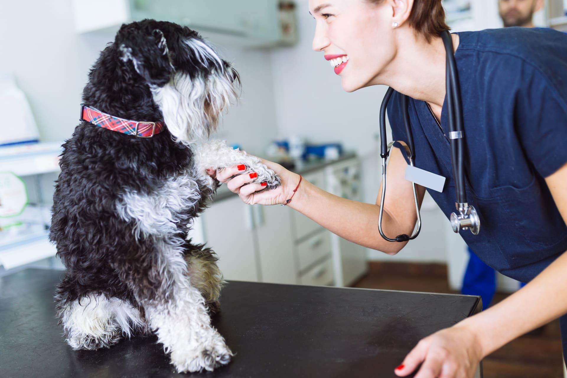 vet visiting dog at home