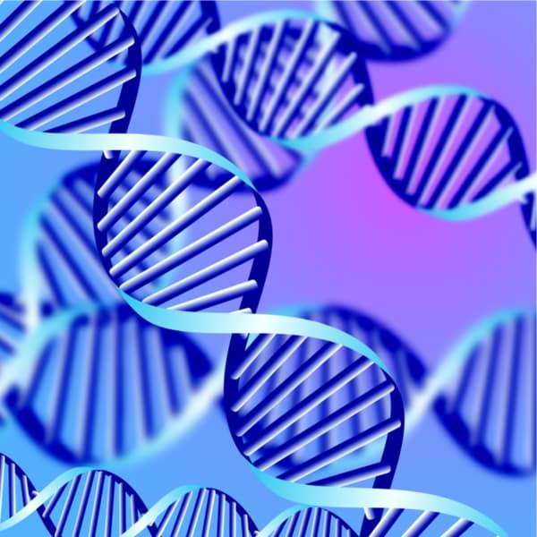 image of human genes