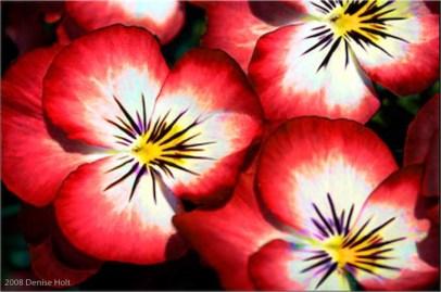 Image source: www.deniseholt.com