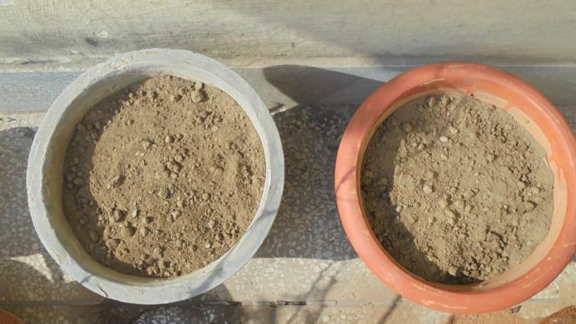 My Tomato Pots