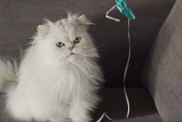 A Cat Talks To Its Owner In This Wacky Ad From Onken! cat