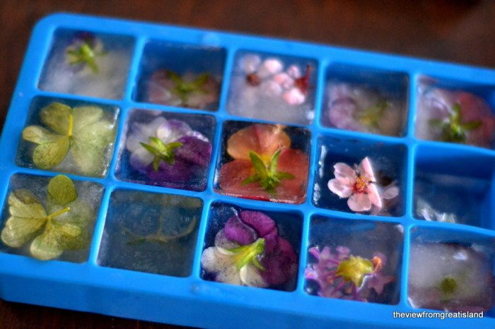Photo of edible Flower Ice Cubes in an ice cube tray.