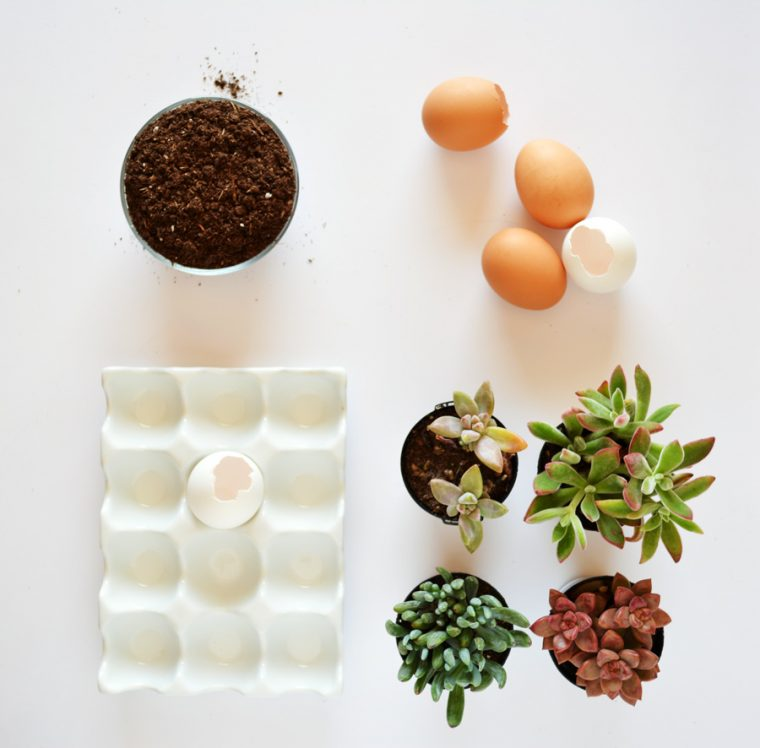 Making mini succulent planters out of eggshells