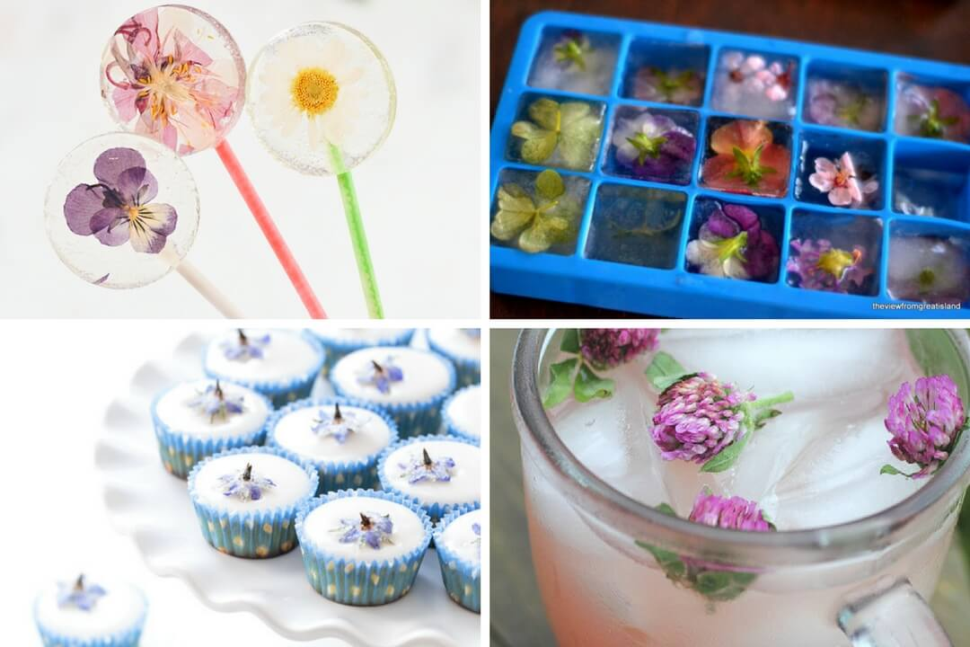 A collage of Edible Flower Recipe photos