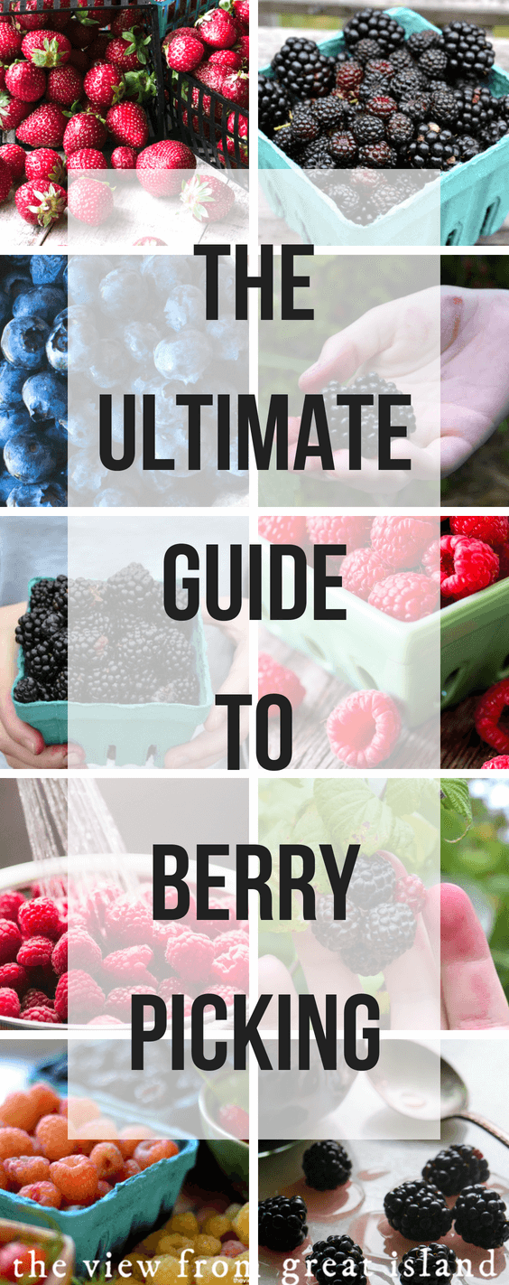 Berry picking is a summer experience no one should miss. But when? Where? How?  I've got you covered with this Ultimate Guide to Summer Berry Picking. #berries #foraging #strawberries #blueberries #blackberries #raspberries #huckleberries #fruit #pickyourown #summerproduce #gardening #seasonal